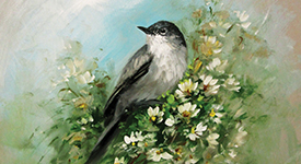 CC102 The Gnatcatcher
