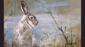 CC105 Snowshoe Hare