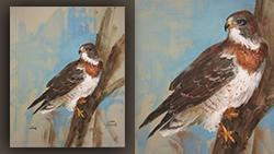 CC112 Swainson's Hawk